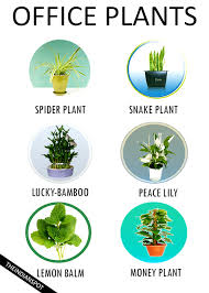 best plant for office 7 best low maintenance plants for the office theindianspot