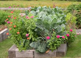How To Plant Vegetables In A Garden by Harriet U0027s Vegetable Garden In Maine Fine Gardening