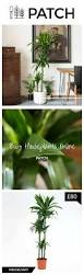 best indoor house plant 39 best images about the best indoor house plants on pinterest