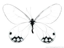 free butterfly coloring pages simple butterfly coloring pages
