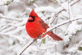 Audubon Backyard Bird Count by It U0027s Time For The Great Backyard Bird Count Birdwatching