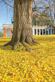 the south u0027s best fall colors southern living