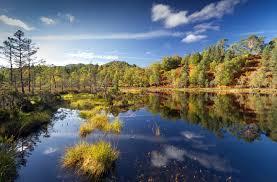 glen affric estate native woodland in glen affric