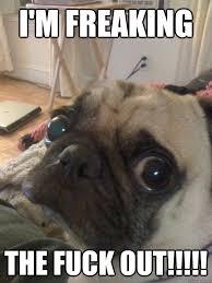 Nervous Meme - i m freaking the fuck out nervous pug quickmeme