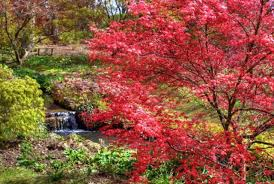 Most Beautiful Gardens In The World Irstenbosch National Botanical Garden South Africa