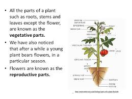 plant reproduction ppt video online download
