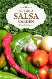 grab your tortilla chips and grow a salsa garden plants
