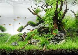 Aquascape Design Aquascaping Styles Design Ideas And Mistakes To Avoid