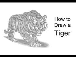 how to draw a tiger roaring rajzok sketches