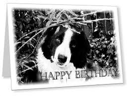 border collie dog happy birthday card cute by newcreationz 3 50