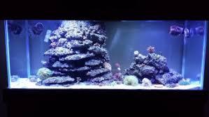 best led refugium light red white leds for fuge 3reef aquarium forums