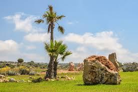 free photo palm trees landscaping rocks landscape garden max pixel