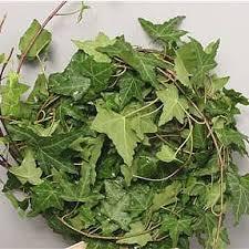 Wholesale Flowers Online Fresh Cut Ivy Wholesale Flowers U0026 Florist Supplies Uk