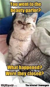 Sarcastic Cat Meme - you went to the beauty parlor sarcastic cat meme pmslweb