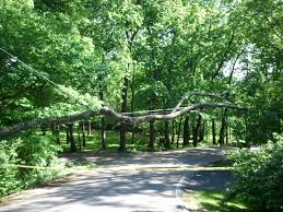 tree service for hendersonville tennessee provided by tree