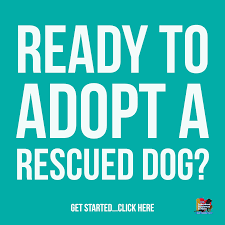 boxer dog adoption los angeles labs and more rescue is a non profit organization adopt today