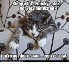 21 Of The Best Grumpy - 25 best memes about finicky finicky memes