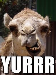 Camel Meme - yurrr camel meme on memegen