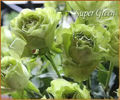 louisville florists roses oberer s flowers dayton cincinnati columbus indianapolis