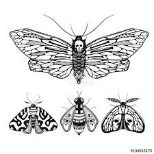 vector illustration with mystic ornamental butterflies isolated on