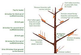 starting a community orchard in dakota publications