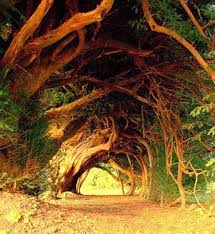chang s musings fwd 10 most beautiful tree tunnels in the world