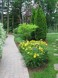 low maintenance trees and shrubs