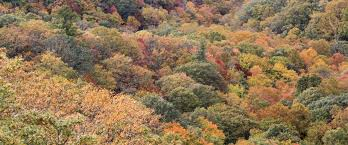 North Carolina Nature Activities images Memorable leaf viewing activities blowing rock north carolina jpg