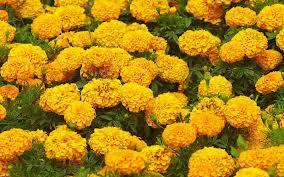 Flower Gardens Wallpapers - garden flowers hd wallpapers free