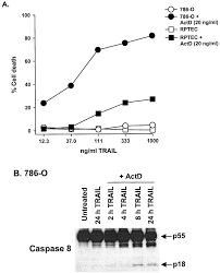 induction and regulation of tumor necrosis factor related
