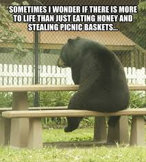 Funny Bear Meme - bear at picnic table meme images table decoration ideas