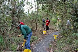 friends of peacehaven botanic park inc new members new plants charles and motee rogers bushland reserve lantana removal at