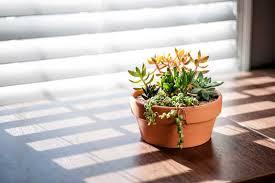 creating an indoor succulent container merrifield garden center