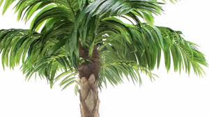 quality artificial peruvian palm tree 8ft by vert lifestyle