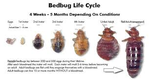 Bed Bugs On Cats How To Get Rid Of Bed Bugs Fast