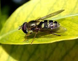 Getting Rid Of Flies In Backyard Flies On Patio Get Rid Of Getting Rid Of Flies 1000 Ideas About