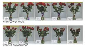 flower food packets why do flowers need food florist with flowers