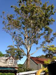 inner west sydney tree services trees company