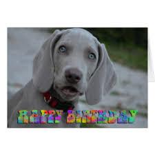 weimaraner birthday cards invitations zazzle co uk