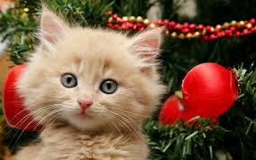 getting a kitten for christmas compilation 2013 youtube