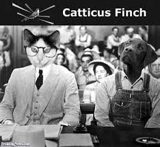 To Kill A Mockingbird Cat Meme - cat lawyer pictures freaking news