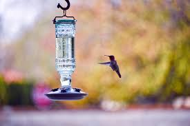 red head hummingbird free stock photo public domain pictures