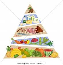 food pyramid concept fruits vector u0026 photo bigstock