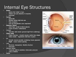 eye pain from light the accessory structures of the eye eyebrows shade eyes from