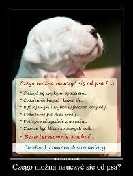 czego można nauczyć się od psa demotywatory pl