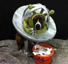Funny Halloween Costumes Cats 74 Pet Halloween Costumes Images Animals Pet