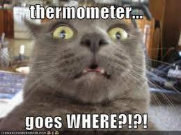 Lolcat Meme - lolcat thermometer