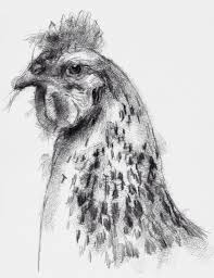 one of my sketch a day drawings nice cockerel art cockerel