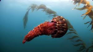 jellyfish rule jellyfish things you didn u0027t know about the