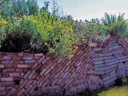 pflanzen fã r den balkon sichtschutz für garten und balkon quelle imago ruinen mauer